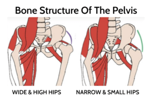 diagram of the muscles of the pelvis