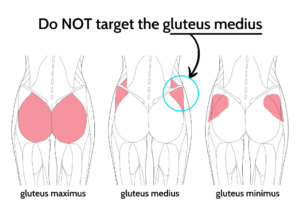 diagram of the gluteal muscles